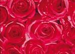12679 Roses Пленка GEKKOFIX